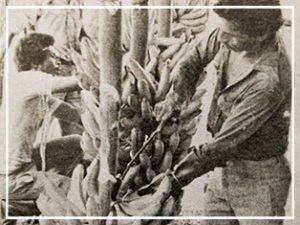 A 84 años de la matanza de los trabajadores de las plantaciones bananeras La masacre de las bananeras